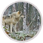 Timber Wolf Pictures 185 Round Beach Towel