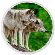 Timber Wolf Pictures 191 Round Beach Towel