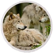 Timber Wolf Pictures 192 Round Beach Towel