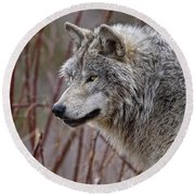 Timber Wolf Pictures 197 Round Beach Towel
