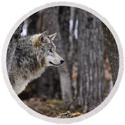 Timber Wolf Pictures 203 Round Beach Towel