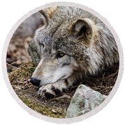 Timber Wolf Pictures 205 Round Beach Towel