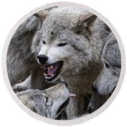 Timber Wolf Pictures 210 Round Beach Towel