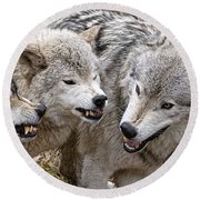 Timber Wolf Pictures 213 Round Beach Towel