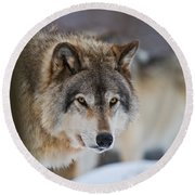 Timber Wolf Pictures 259 Round Beach Towel