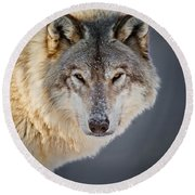Timber Wolf Pictures 260 Round Beach Towel