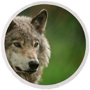 Timber Wolf Pictures 261 Round Beach Towel