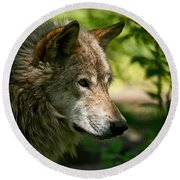 Timber Wolf Pictures 263 Round Beach Towel