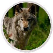 Timber Wolf Pictures 266 Round Beach Towel