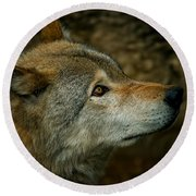 Timber Wolf Pictures 268 Round Beach Towel