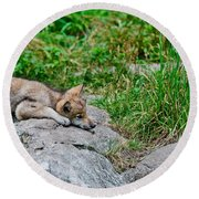 Timber Wolf Pictures 329 Round Beach Towel