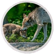 Timber Wolf Pictures 332 Round Beach Towel