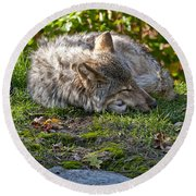 Timber Wolf Pictures 42 Round Beach Towel