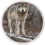 Timber Wolf Pictures 495 Round Beach Towel