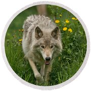 Timber Wolf Pictures 59 Round Beach Towel