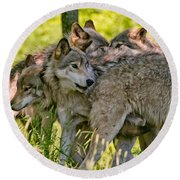 Timber Wolf Pictures 61 Round Beach Towel