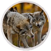 Timber Wolf Pictures 62 Round Beach Towel