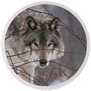 Timber Wolf Pictures 620 Round Beach Towel