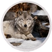Timber Wolf Pictures 776 Round Beach Towel