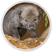 Timber Wolf Pictures 782 Round Beach Towel