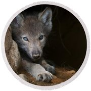 Timber Wolf Pictures 875 Round Beach Towel