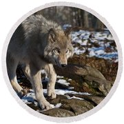 Timber Wolf Pictures 969 Round Beach Towel