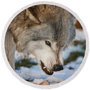 Timber Wolf Pictures 985 Round Beach Towel