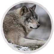 Timber Wolf Portrait Round Beach Towel