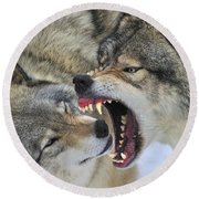 Timber Wolves Play Round Beach Towel