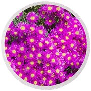 Tiny Dancer - Colorful Midday Flowers Lampranthus Amoenus Flower In Bloom In Spring. Round Beach Towel