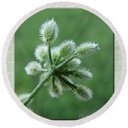 Tiny Flower Head Before Bloom Round Beach Towel