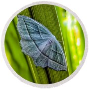 Tiny Moth On A Blade Of Grass Round Beach Towel