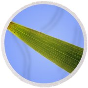 Tip Of An Iris Leaf Isolated On Blue Round Beach Towel