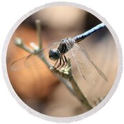 Tired Dragonfly Square Round Beach Towel