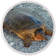 Tired Turtle Round Beach Towel