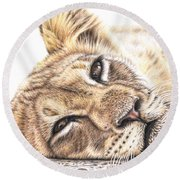 Tired Young Lion Round Beach Towel