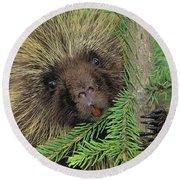 T.kitchin 14107c, Porcupine In Spruce Round Beach Towel