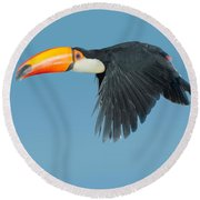 Toco Toucan In Flight Round Beach Towel