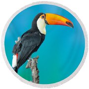 Toco Toucan Perched Round Beach Towel