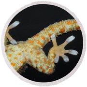 Tokay Gecko Feet Round Beach Towel