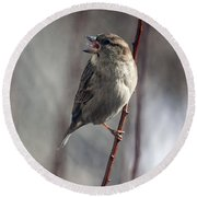 Tongue Of The Sparrow Round Beach Towel