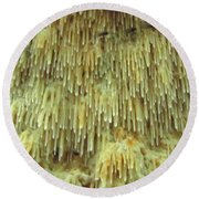 Toothed Fungi Macro Round Beach Towel