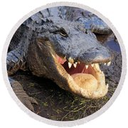 Toothy Grin Round Beach Towel by Adam Jewell