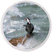 Male Torrent Duck Round Beach Towel