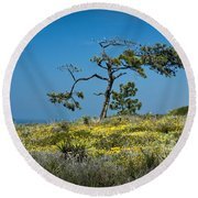 Torrey Pine On The Cliffs At Torrey Pines State Natural Reserve Round Beach Towel