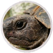 Tortoise Portrait In Macro Round Beach Towel