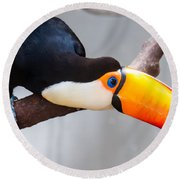 Toucan Ramphastos Toco Sitting On Tree Branch In Tropical Fore Round Beach Towel