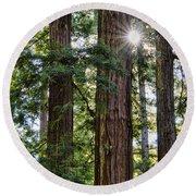 Towering Redwoods Round Beach Towel