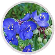 Tradescantia Blooming Round Beach Towel