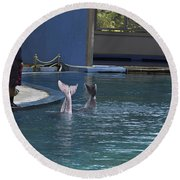 Trainer And The Tails Of A Duo Of Dolphins At The Underwater World Round Beach Towel